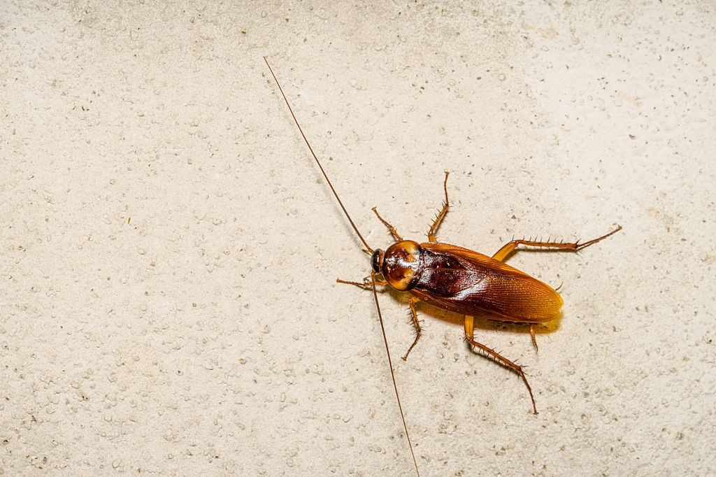 Cockroach Control, Pest Control in Hackney, Homerton, E9. Call Now 020 8166 9746